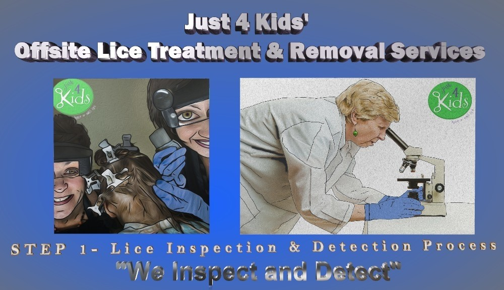 Lice Treatment Menu and Pricing - Lice Treatment and Removal Services - Step 1 - We Inspect and Detect